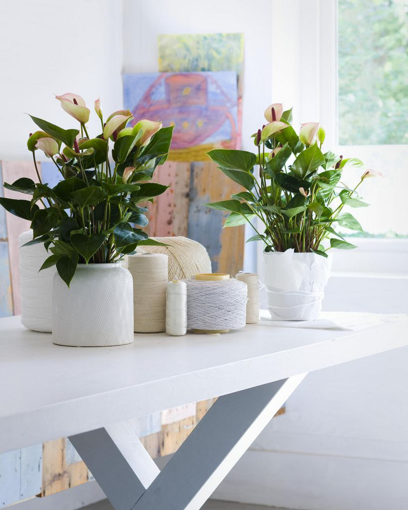 interior-what-are-good-indoor-plants-ideas-for-your-home