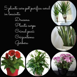 decorette-5-plante-care-purifica-aerul.jpg